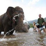 Elephant Bath Excursion