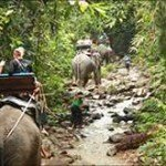 Elephant Waterfall Tour