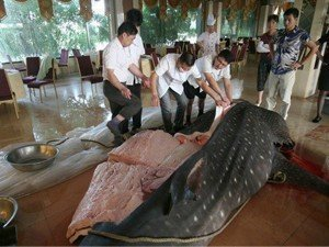 whale shark threats Chinese restaurant